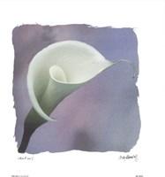 Calla Lily Fine Art Print