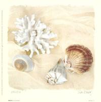 Shells IV Fine Art Print