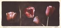 Illuminating Tulips I Framed Print