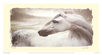 """17"""" x 9"""" Horse Pictures"""