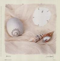 Shells II Framed Print