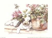 Geraniums Jubilee Fine Art Print