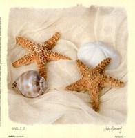 Shells III Fine Art Print