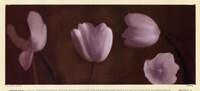 Illuminating Tulips IV Framed Print