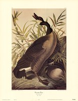 "Canada Goose by John Woodhouse Audubon - 23"" x 30"""