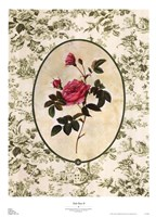"Toile Rose II by Sarah Elizabeth Chilton - 20"" x 28"""