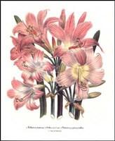 Belladonna Fine Art Print