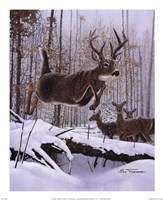 Leaping Deer Fine Art Print
