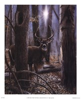 Woodland Sentry Fine Art Print