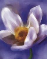 Daffodil Study Fine Art Print