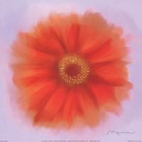 Red Dahlia Fine Art Print