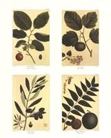 Botanical Four Panel II Fine Art Print