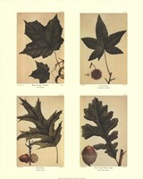 Botanical 4 Panel I Fine Art Print