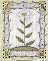 Chrysanthemum Leucanthemum Fine Art Print
