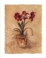 Secret Amaryllis II Framed Print