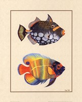 Tropical Fish II Fine Art Print