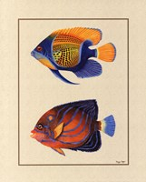 Tropical Fish III Fine Art Print