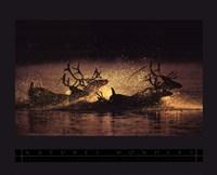 Caribou Fine Art Print