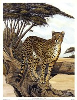 Cheetah Gazing Fine Art Print