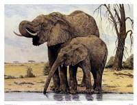 Elephants By The Waterhole Fine Art Print