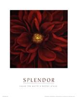 "Splendor - Red Pool by Mali Nave - 16"" x 20"""