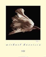 "Tulip by Michael Harrison - 16"" x 20"""