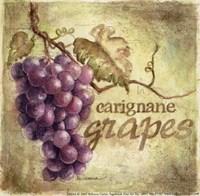 Carignane Fine Art Print