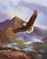 Eagle Gliding Fine Art Print