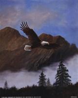Eagle Soaring Fine Art Print