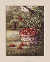 Apple Orchard Fine Art Print