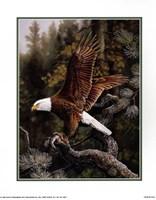 Eagle Perch Fine Art Print