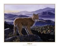 "Bobcat by Don Balke - 28"" x 22"""