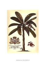 "Palm and Crest II by Mali Nave - 10"" x 13"" - $10.49"