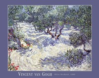 Olive Orchard by Vincent Van Gogh - various sizes
