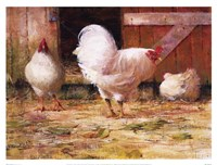White Leghorns Fine Art Print