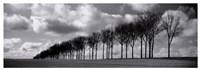 "Somme Treeline by Charlie Waite - 37"" x 13"""