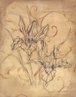 Pencil Sketch Floral III Fine Art Print