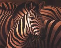 Zebra Grande