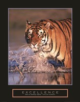 Excellence - Bengal Tiger Fine Art Print