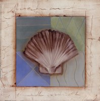 Shell Accents IV Framed Print