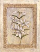Flores Blancos ll Fine Art Print