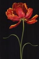 """Tulipa: Fantasy I by Mali Nave - 24"""" x 36"""""""