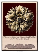 Rosone Antico II Fine Art Print