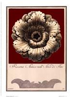 Rosone Antico III Framed Print