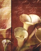 "22"" x 28"" Calla Lily Pictures"