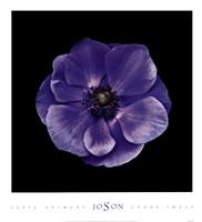"""Poppy Anemone by Mali Nave - 20"""" x 22"""""""