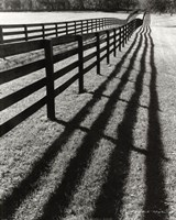 Fences And Shadows, Florida Fine Art Print