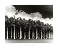 "White Palms, Costa Rica by Monte Nagler - 24"" x 20"""