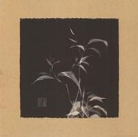 Golden Bamboo I Fine Art Print