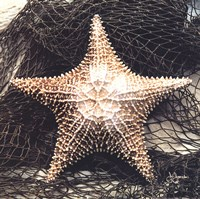 Starfish With Net Fine Art Print